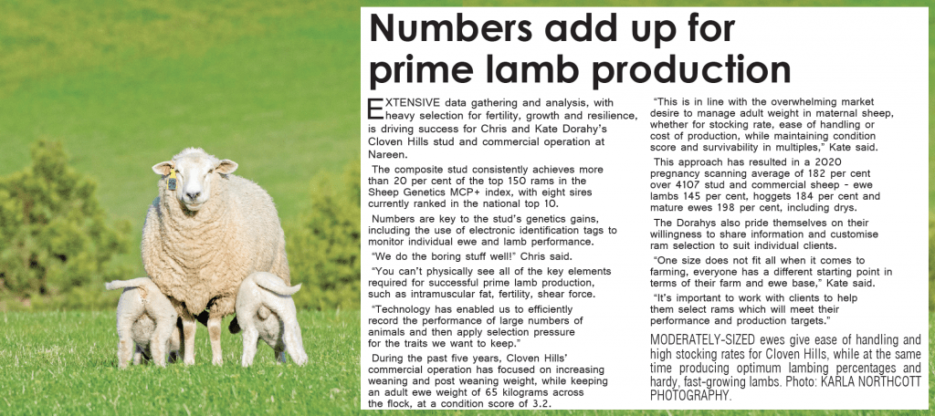 Sheepvention in Print