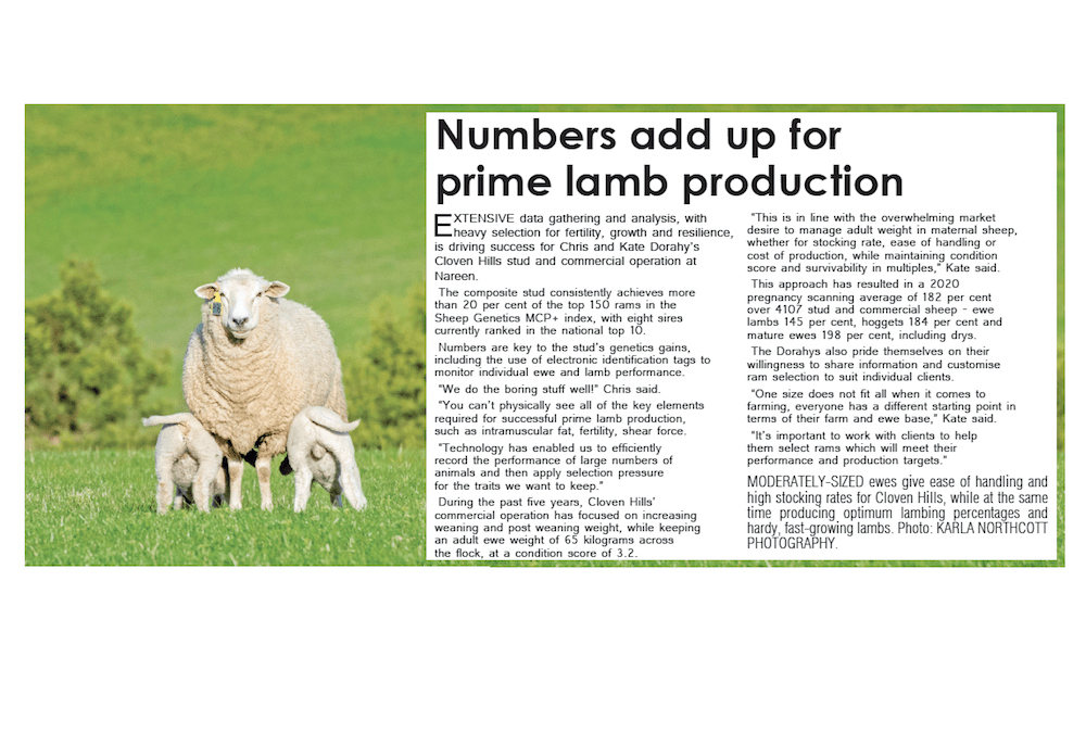 Sheepvention in Print, 2020 (The Spectator Group)
